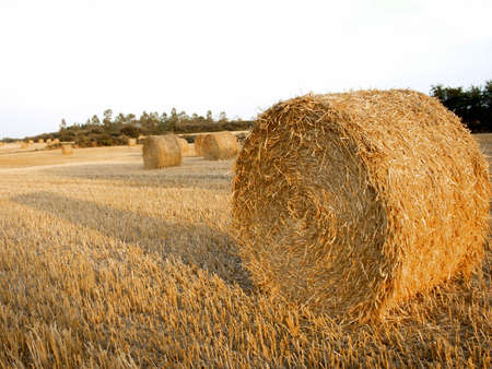 roll of straw Stock Photo