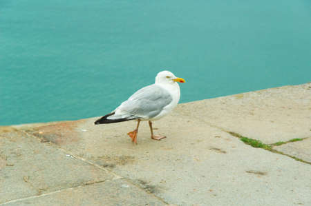 a sea gull striding over the edge of a dock Stock Photo