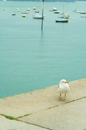 a sea gull standing at the edge of a dock
