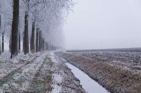 A frozen field and trees with frozen twigs Stock Photo - 2276513