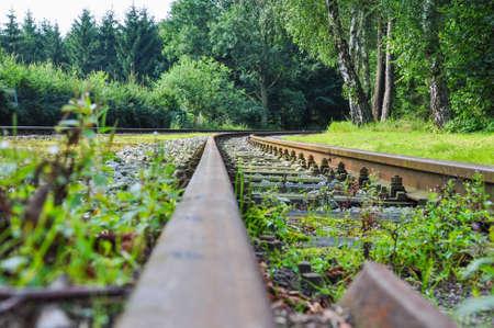 wood railway: Railway goes to wood Stock Photo