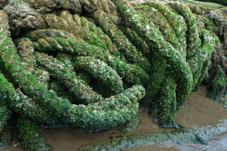 Rope full with moss at seaside Stockfoto