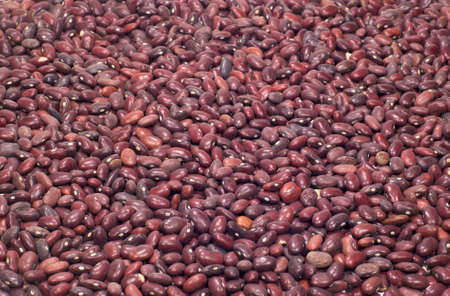 haricot: Many raw haricot beans as background closeup