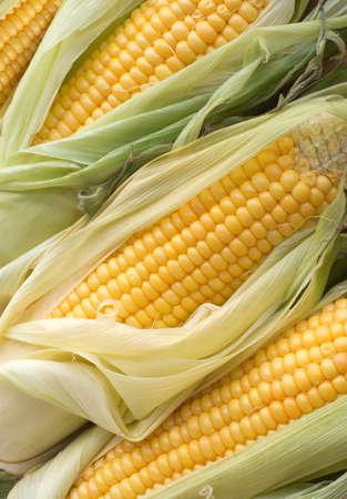Many ripe corn cobs closeup photo