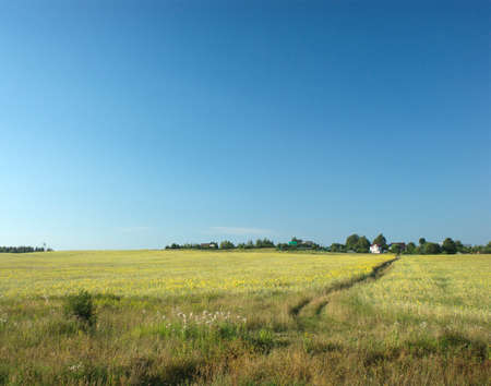Rural summer landscape with path through meadow to houses on skyline photo