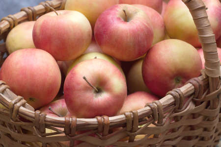 Many ripe red and yellow apples collected in brown wicker basket closeup photo