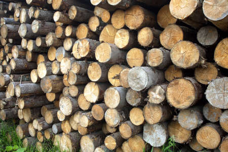 sawed: Many sawed pine logs stacked in a pile horizontal view closeup Stock Photo