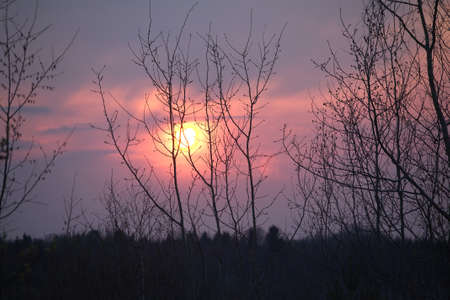 duskiness: Spring trees silhouettes against beautiful red sunset in rural place