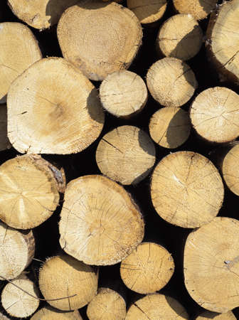 sawed: Many sawed pine logs stacked in a pile vertical front view closeup