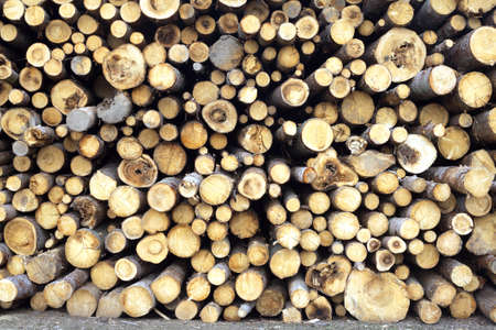 bad condition: Many bad condition sawed pine logs stacked in a pile front view closeup