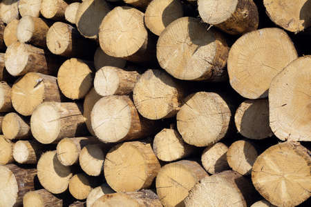 sawed: Many sawed pine logs stacked in a pile side view closeup Stock Photo