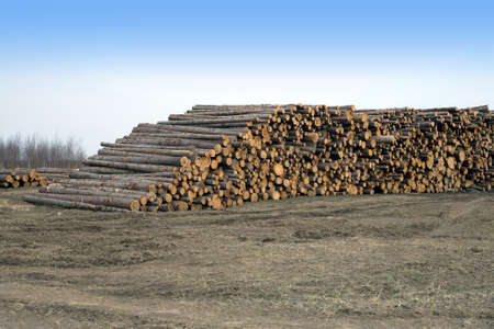 sawed: Many stacked sawed pine logs in big piles over clear blue sky side view horizontal closeup Stock Photo