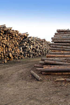 sawed: Many stacked sawed pine logs in big piles over clear blue sky vertical view