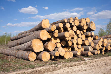 sawed: Landscape with stacked sawed pine logs in a pile over forest and beautiful sky width clouds Stock Photo
