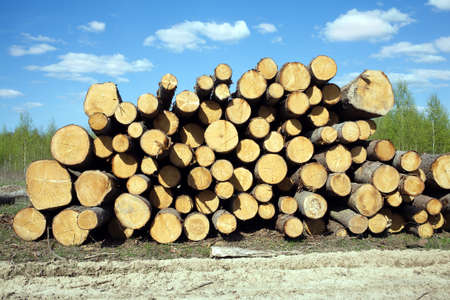 sawed: Rustic landscape with stacked sawed pine logs in a pile over forest and beautiful sky width clouds in summer day