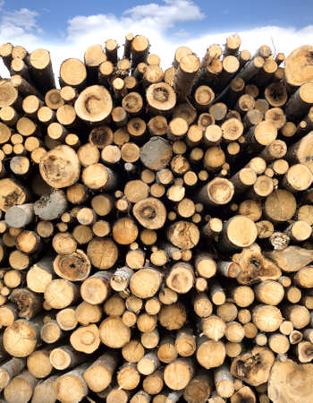 sawed: Many sawed pine logs stacked in a pile under cloudy sky. Front view vertical closeup Stock Photo
