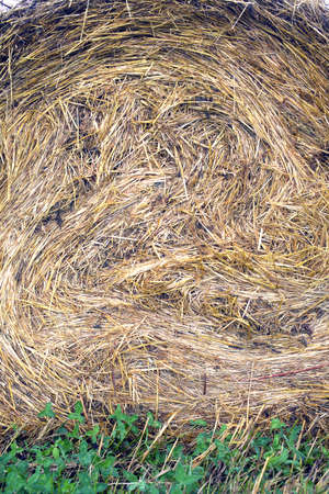 convoluted: Lots of twisted dry hay photographed vertical view closeup