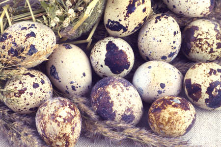 mottle: Still life with raw quail eggs and dry field flowers on brown fabric background closeup