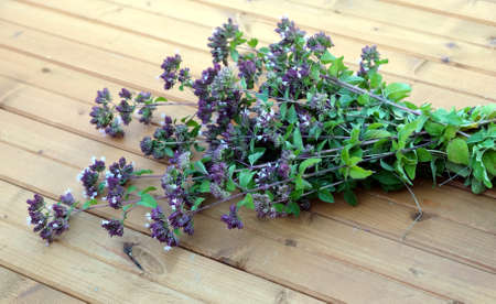 field mint: Mentha arvensis. Bouquet of branches of field mint on brown wood background closeup view
