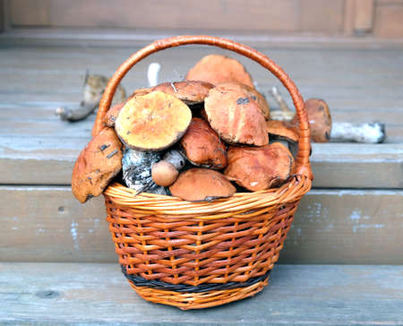 Still life with crop of many edible mushrooms in brown wicker basket on wooden house porch steps front outdoor front view horizontal