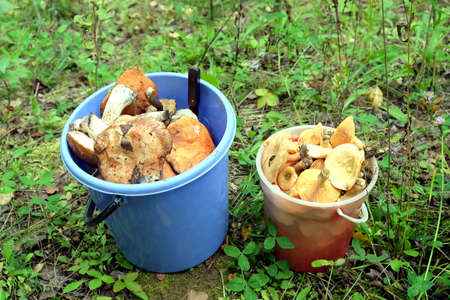 Two plastic buckets blue and red full of collected edible mushrooms outdoors close-up