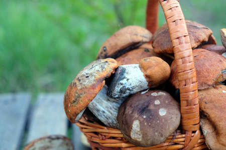 Still life with crop of many edible mushrooms in brown wicker basket on wooden table closeup. Side view outdoors vertical against green grass