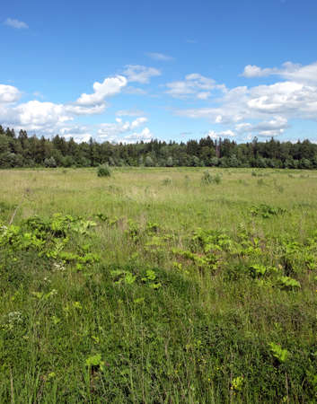 Nature landscape with green field and forest far away in sunny summer day. Vertical view Reklamní fotografie