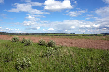 the arable land: Nature landscape with green field, plow and forest far away in sunny summer day. Horizontal view