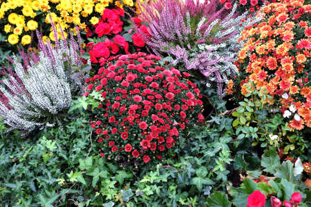 Still life with a lot of beautiful colorful flower bushes in the garden closeup
