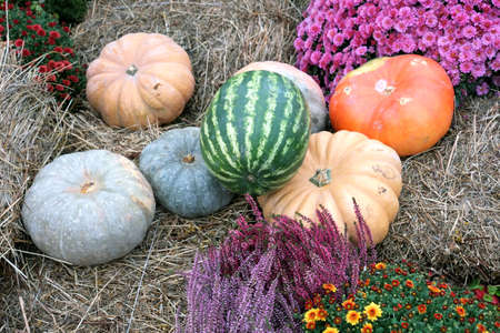 Beautiful still life with ripe on dry hay closeup in autumn day closeup