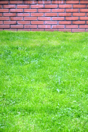 Green grass before red brick wall in city park on spring day front view vertical closeup Stock Photo