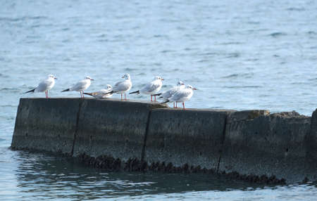 Some gulls rest on sea breakwater
