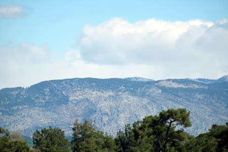Pine forest landscape with high mountains Banco de Imagens