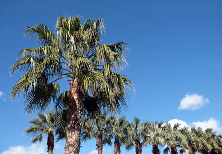 Some tropical palm trees grows outdoors under blue sky