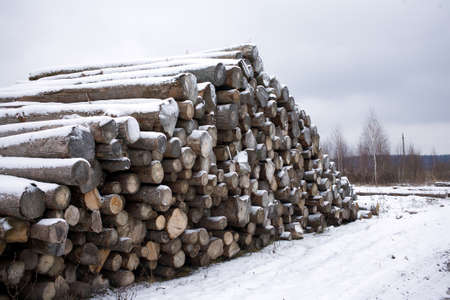 Many sawed pine logs stacked in long pile in the snow in rural place in winter season under gray cloudy sky side view Banco de Imagens