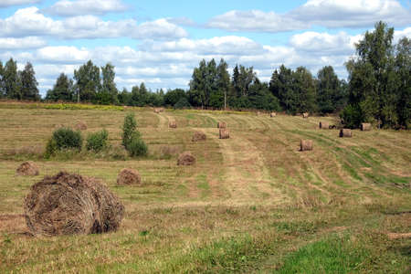 Rural landscape with summer field with many rolled dry hay on bright sunny day horizontal view