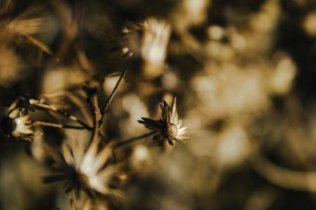 whirlwind: Whirlwind of flowers Stock Photo