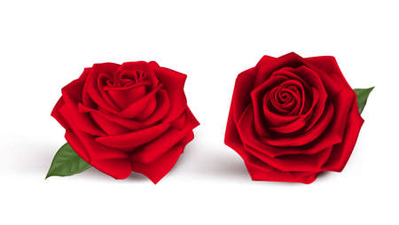 red roses: Valentines Day Sweet Red Roses. Mesh Vector Illustration Illustration