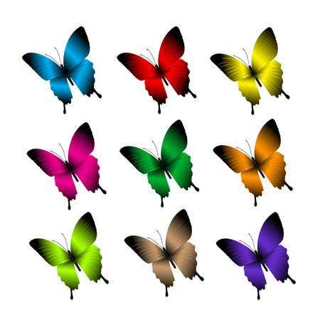 butterfly isolated: Set of Realistic Colorful Butterflies Isolated for Spring. Editable Vector Illustration Illustration