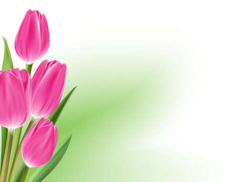isolated: Realistic Colorful Tulips in Isolated Background