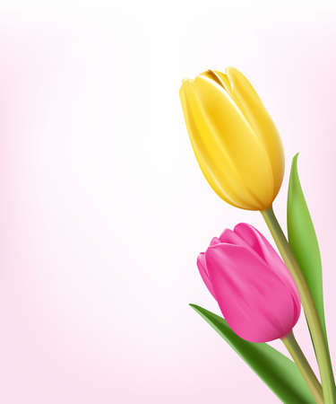 colorful flowers: Realistic Colorful Tulips in Isolated Background. Editable Vector Illustration
