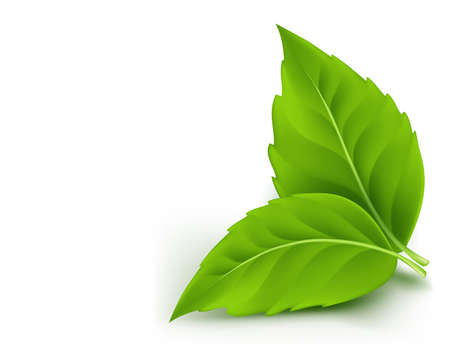 Realistic Eco Friendly Leaves. Vector Illustration Vector