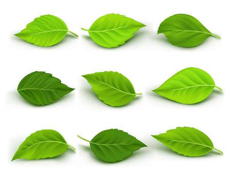 Zestaw Realistyczne zielone liście kolekcji. Ilustracja wektora
