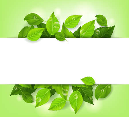 eco green: Realistic Leaves Background with White Space. Vector Illustration Illustration