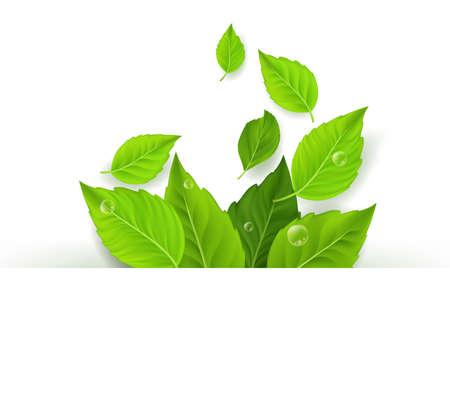 Realistic Leaves Background with White Space. Vector Illustration 向量圖像