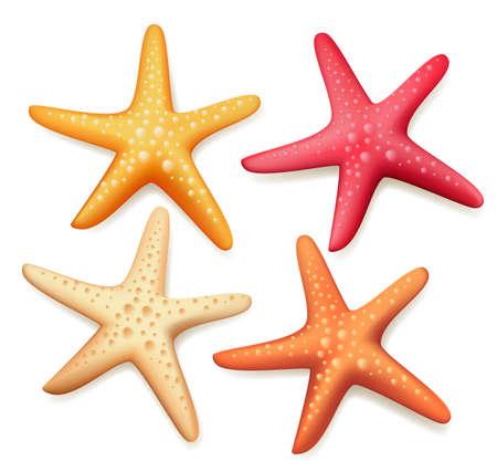 Realista estrellas de mar coloridas conjunto en el fondo blanco. Ilustración vectorial
