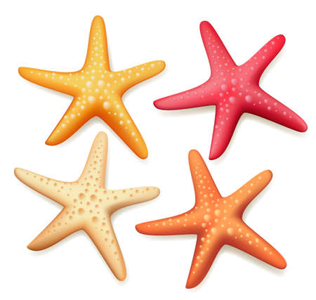 starfish beach: Realistic Colorful Starfish Set in White Background. Vector Illustration Illustration