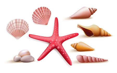 sea star: Set of Realistic Colorful Sea Shells and Stones Elements and Decoration for Summer Season. Vector Illustration