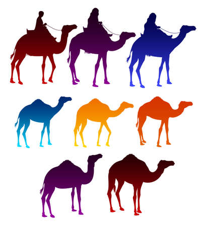 camel: Set of Colorful Camels and Arab Men Riding in Camels Elements Isolated i White Background. Vector Illustration Illustration