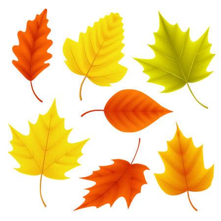 Vector de hojas de otoño para elementos estacionales de otoño con hojas de arce y roble en colores aislados en fondo blanco. Ilustración vectorial
